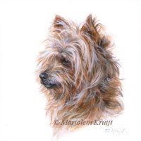 'Yorkshire terrier', miniatuur portret, 10x10 cm(verkocht)