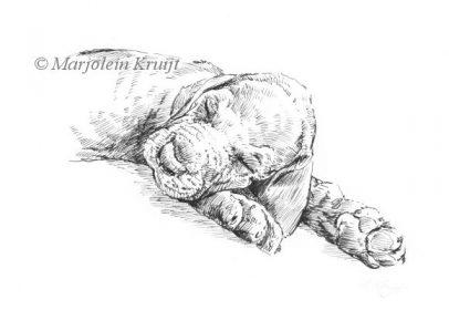 'Slapende puppy', inkttekening (te koop)