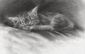 'Slapende kitten', 22x15 cm, houtskool (te koop) €250