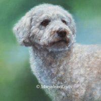 'Labradordoodle', 50x40 cm, olieverf schilderij (verkocht/opdracht))