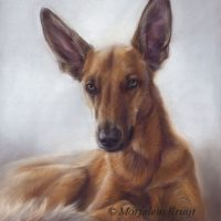 'Podenco/herder mix', 50x40 cm,pastel portret (verkocht/opdracht)