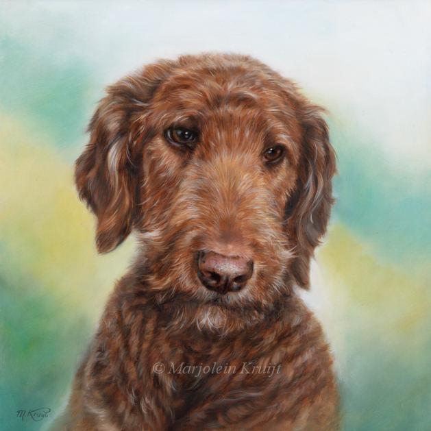 'Labradordoodle'-Pumpkin,30x30 cm, olieverf schilderij (verkocht)