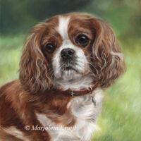 'Cavalier king charles Spaniel'- Melissa-30x24 cm, olieverf schilderij (verkocht)