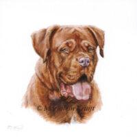 'Bordeau hond'-Caramel portret', 10x10 cm, Marjolein Kruijt (verkocht/opdracht)