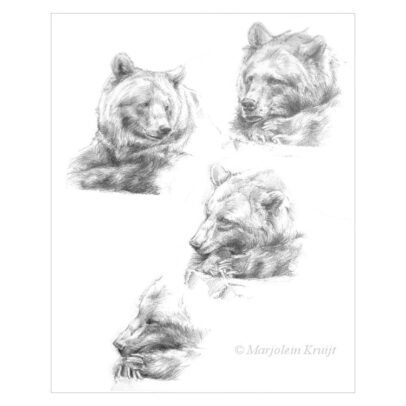 'Beren', potlood tekening (te koop)