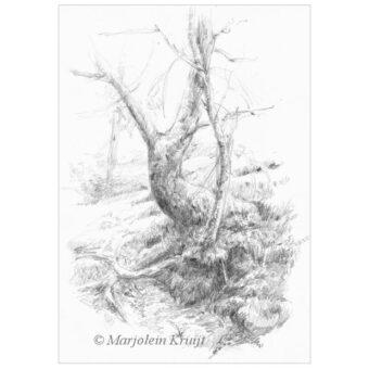 'Boom'-Dartmoor, potlood tekening, 21x15cm (te koop)