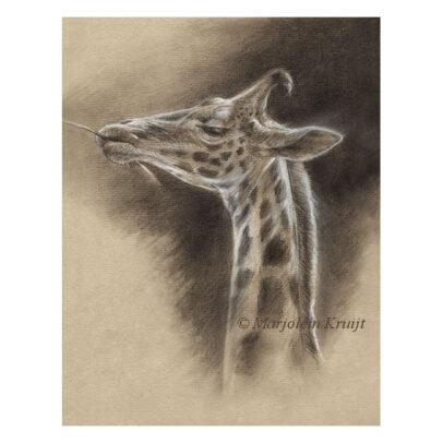 'Giraffe', tekening (te koop)