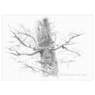 'Mystieke boom'. potlood tekening, 15x21cm (te koop)