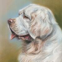 'Clumber spaniel'- Yourgo, pastel portret 30x24 cm (verkocht/opdracht)