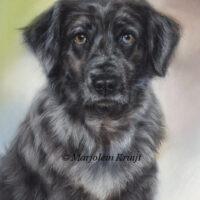 'Flan', honden portret in pastel (verkocht/opdracht)