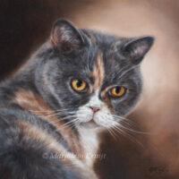 'Sox', katten olieverf schilderij, 20x20 cm (opdracht/verkocht)