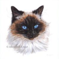 'Ragdoll'-Beau, 15x15 cm, acryl kattenportret op papier (verkocht)