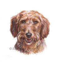 'Teckel'-Gijs, portret 10x10 cm, acryl op papier (verkocht)