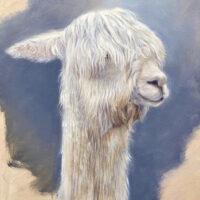 'Suri alpaca', 24x30 cm, olieverf schilderij,(te koop)