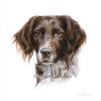 'Heidewachtel'-Casper, 10x10 cm, portret (opdracht/verkocht)