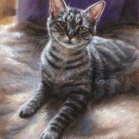 'Poezul'- rescue kat, olieverf portret 24x18cm (verkocht/opdracht)