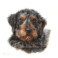 'Ruwharige teckel', portret 10x10 cm, acryl op papier (verkocht)